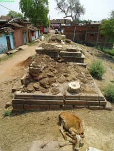 Száradó tehénlepények. Panagar, Jabalpur District, Madhya Pradesh